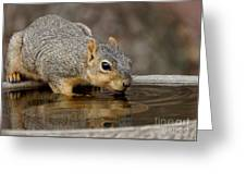 Fox Squirrel Greeting Card by Lori Tordsen
