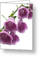 Foxglove Flowers Greeting Card by Tony Cordoza