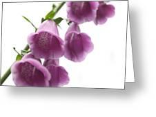 Foxglove Flowers Greeting Card by Tony Cordoza