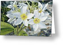 Frangipani Greeting Card by Danielle  Perry