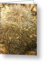 Frilled Sea Anemone Greeting Card by Paul Ward