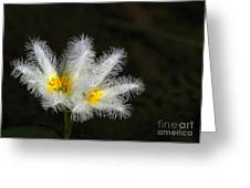 Frilly White Water Lily Greeting Card by Sabrina L Ryan