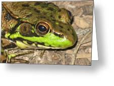 Frog Greeting Card by Debbie Finley