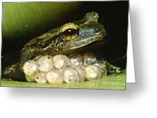 Frog Guarding His Eggs Greeting Card by Dante Fenolio