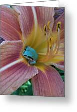 Frog In The Day Lilly Greeting Card by Jeremiah Colley