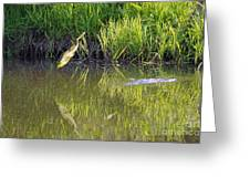 Frog Jumping In Water Greeting Card by Dan Friend