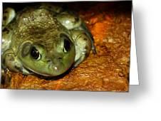 Frog Love Greeting Card by LeeAnn McLaneGoetz McLaneGoetzStudioLLCcom
