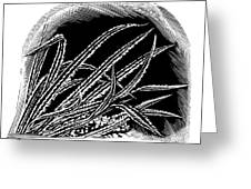 Frost On Blades Of Grass, Woodcut Greeting Card by Gary Hincks