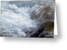 Froth Greeting Card by Sharon Talson