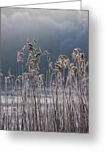 Frozen Reeds At The Shore Of A Lake Greeting Card by John Short