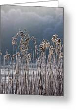 Frozen Reeds At The Shore Of A Lake Greeting Card by John Short