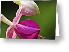 Fuchsia Flower Greeting Card by Elena Elisseeva