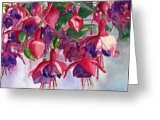 Fuchsia Frenzy Greeting Card by Lynne Reichhart