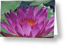 Fuchsia Water Lily Greeting Card by Chad and Stacey Hall