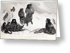 Fuegians From Darwin's Beagle Voyage Greeting Card by Paul D Stewart
