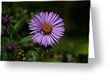 Full Aster Greeting Card by Jessica Lowell