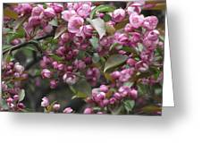 Full Blossom Greeting Card by Erika Betts