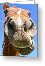 Funny Brown Horse Face Greeting Card by Jennie Marie Schell