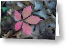Fushia Leaf 2 Greeting Card by Douglas Barnett