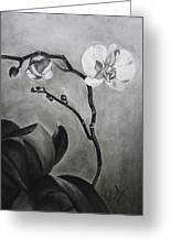 Galen's Orchid Greeting Card by Estephy Sabin Figueroa