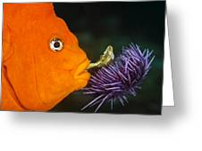 Garibaldi Damselfish Greeting Card by Mike Raabe