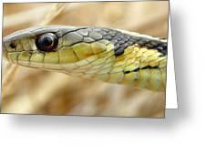 Garter Snake Macro Greeting Card by Griffin Harris