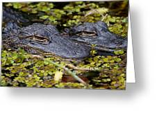 Gator Babies Greeting Card by Andres Leon