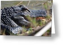 Gator Greeting Card by Susan McNamara