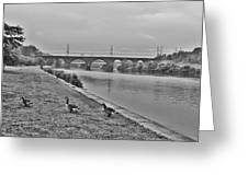 Geese Along The Schuylkill River Greeting Card by Bill Cannon