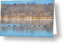 Geese In The Schuylkill River Greeting Card by Bill Cannon