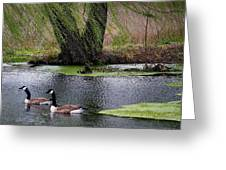 Geese On The Pond Greeting Card by Paulette Thomas