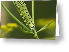 Gentleman Caterpillar... Greeting Card by Nina Stavlund
