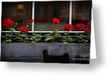 Geranium Flower Box Greeting Card by Doug Sturgess