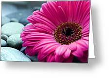 Gerber Daisy In Pebbles Greeting Card by Helen Stapleton