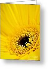 Gerbera Flower Greeting Card by Elena Elisseeva