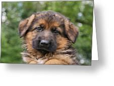 German Shepherd Puppy II Greeting Card by Sandy Keeton