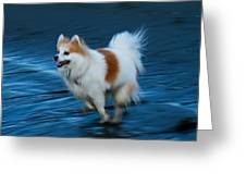 Ghost-dog Greeting Card by Krisztina Harasztosi