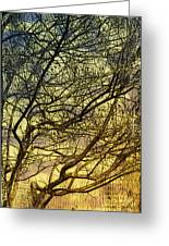 Ghosts Of Crape Myrtles Greeting Card by Judi Bagwell