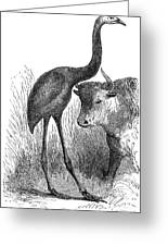 Giant Moa And Prehistoric Cow, Artwork Greeting Card by