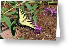 Giant Swallowtail Butterfly Greeting Card by Theresa Willingham