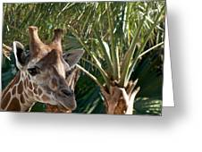 Giraffe With Tree Greeting Card by Jack Scicluna