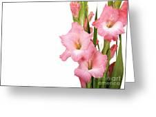 Gladioli On White Greeting Card by Jane Rix