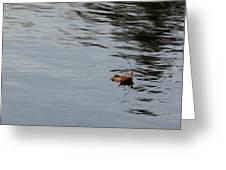 Gliding Across The Pond Greeting Card by LeeAnn McLaneGoetz McLaneGoetzStudioLLCcom
