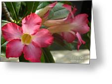 Glimmer Of Pink Greeting Card by Sharon Wood