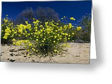 Glischrocaryon Flavescens Greeting Card by Bob Gibbons