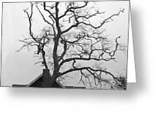 Gnarled Greeting Card by Pamela Patch
