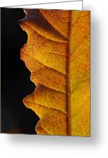 Gold Leaf - The Color Of Autumn Greeting Card by Steven Milner