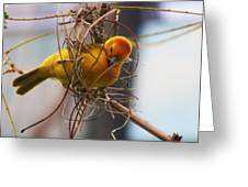 Gold Weaver Greeting Card by Paulette Thomas