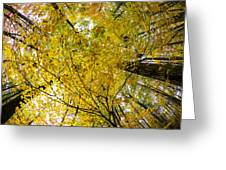 Golden Canopy Greeting Card by Rick Berk
