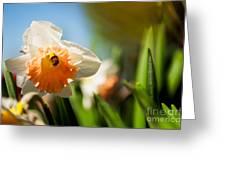 Golden Daffodils  Greeting Card by Venura Herath